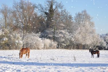 bethemont-la-foret-sous-la-neige-snow